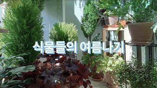 여름철 식물 관리법, 휴가철 물주기 요령