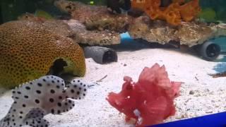 Морские рыбы - Аквариф-центр(Морские аквариумные рыбы в Аквариф-Центре ( www.аквариф-центр.рф ) Рыбы прошли карантин и акклиматизацию в..., 2014-12-29T19:04:59.000Z)