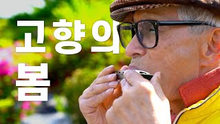 [동요 할아모니카] 고향의 봄 / 심탁…