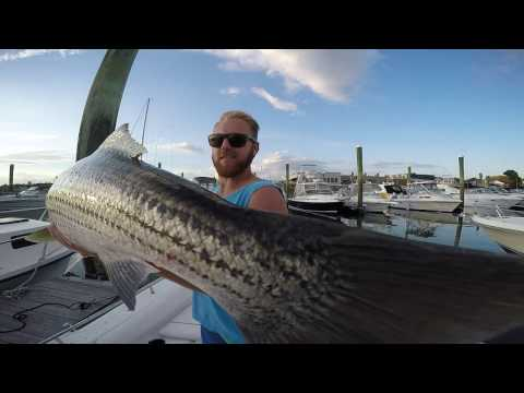 Striper Fishing Boston Harbor 2016 Wrap Up