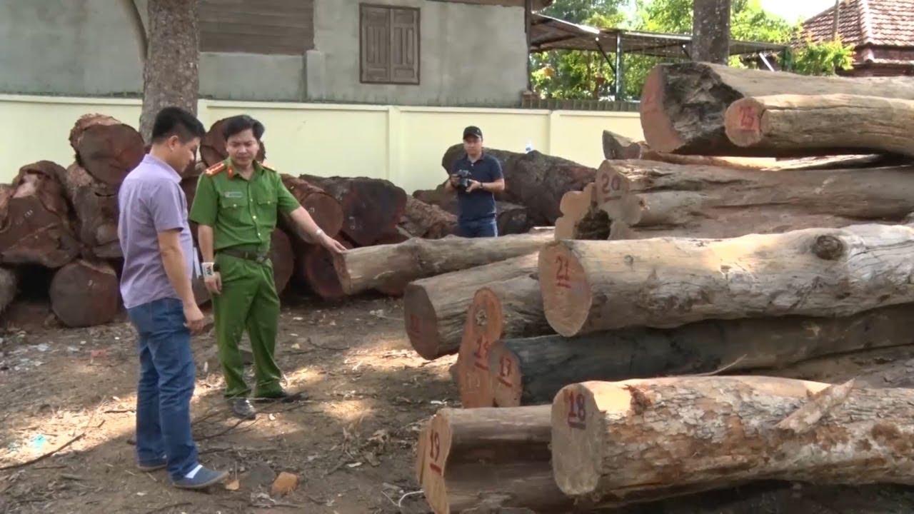 Bắt giữ vụ vận chuyển gỗ quy mô lớn tại Vườn quốc gia Yok Đôn