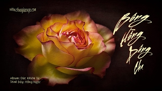 Bông hồng dâng Cha - Hồng Ngọc