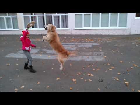 Умная собака Соня