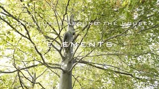Adventures Around the  House (Elements with Mike DeCavalcante)