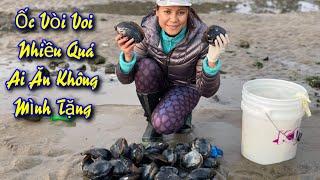 Ốc Vòi Voi (Gaper)Đầy Bờ Biển Tillamook(Cuộc Sống Người Việt Ở Mỹ)#158