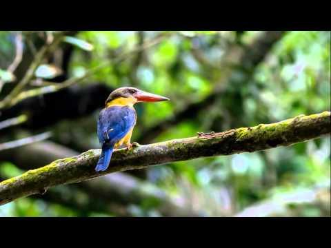 Birding in Peninsular Malaysia