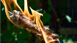 Cattail Hand Drill Friction Fire. Bushcraft Survival Skills. Primitive Skills