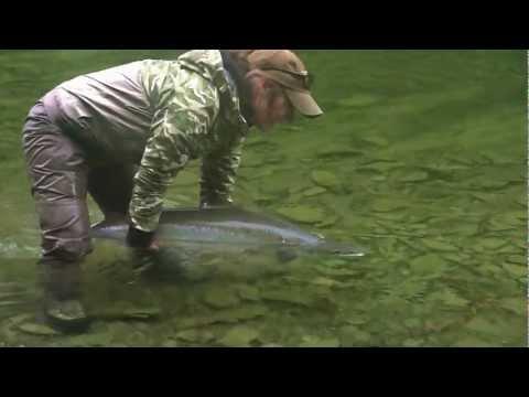 Gaspe Atlantic Salmon Fly Fishing/Peche Saumon Atlantique