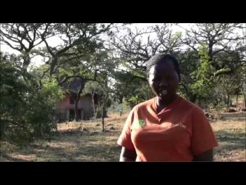 Establishing a mosaic of protected areas in the Swaziland Lubombo