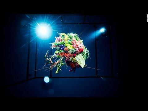 أزهار من اليابان في الفضاء وعمق البحار وعلى الجليد  - 15:56-2018 / 12 / 9