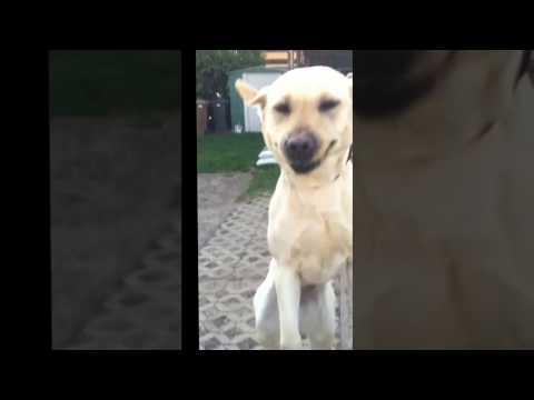 Pluto, keep smiling! Jumping Dog!