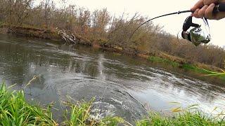 ШОК ТАКОГО СО МНОЙ ЕЩЁ НЕ БЫЛО Щуки красивой лесной реки Рыбалка на спиннинг