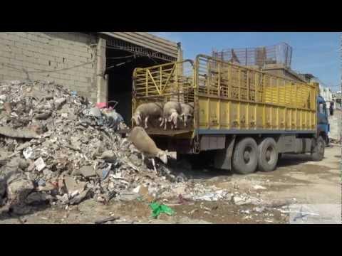 Animals' Angels Lebanon Investigation (2012)