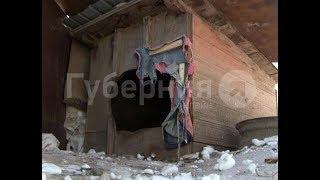 Тигрица задрала очередную собаку в поселке Хабаровского района. MestoproTV