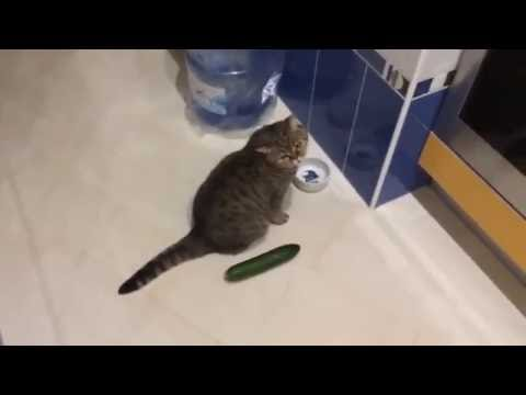 Funny cats scared of cucumbers - cat vs cucumber compilation