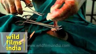 Download Video Castrating a male dog : how it is done MP3 3GP MP4
