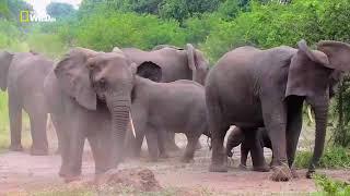 животные Африки. Саванна