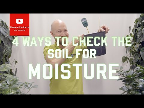 4 ways to check the soil for moisture