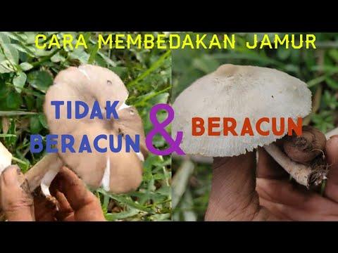 Hati hati!! Ini ciri ciri jamur liar beracun.