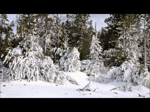 Yellowstone Snow Coach Tour 2014
