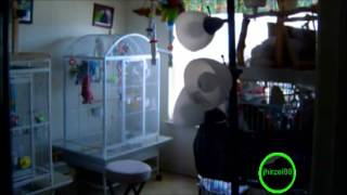 Parrot Rapping To Get Low by Lil Jon and the Eastside Boyz