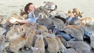 Guy Gets Smothered by Bunnies on Japan