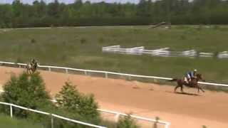 Thoroughbred Race Horses Training at Camptown Race Rrack.