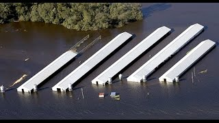 Millions of Chickens Feared Dead at Factory Farms in Wake of Hurricane Matthew