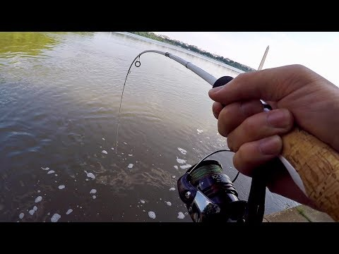 Hunting Down the FRANKENFISH in Washington D.C. (Bank Fishing the Tidal Basin)