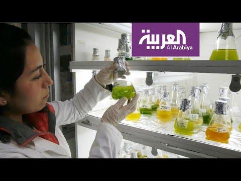 صباح العربية | لصحة قلبك.. تناول الطحالب  - نشر قبل 2 ساعة