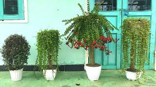 4 Lindos Vasos De Flores Caseiros Criativos