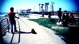 "Yorkshire Terrier : Dog - Huntington Beach ""walking With Puppy"""