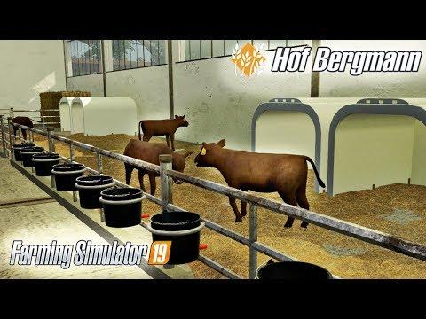 Cielaki Kupione. Obsługa Dojarki -  Hof Bergmann -  ☆ Farming Simulator 19 ☆  #37 ㋡ Anton