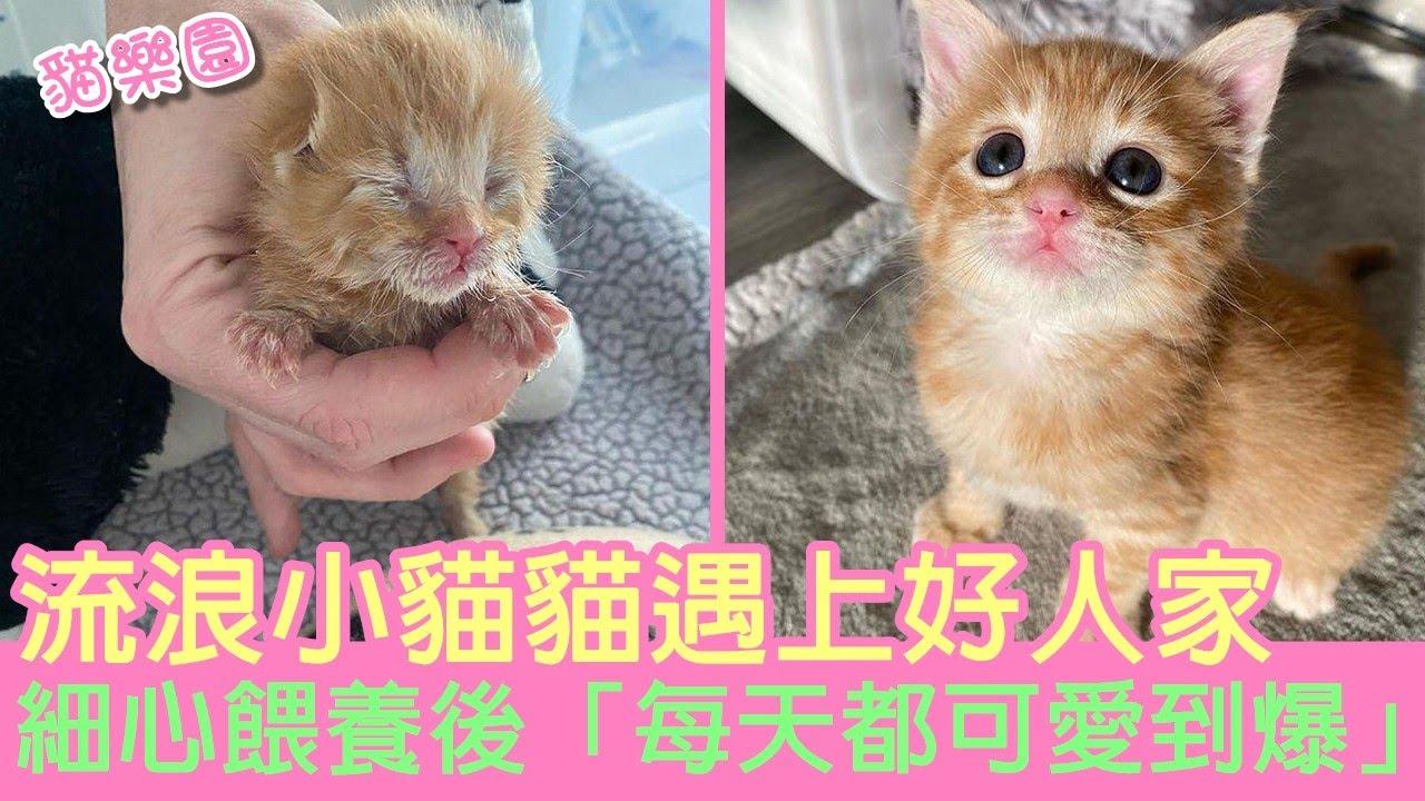 被愛灌溉!流浪小貓貓遇上好人家 細心餵養後「每天都可愛到爆」 | 貓樂園 | 貓咪故事