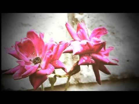 Architectural Garden Design Music Video