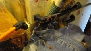 Уничтожение тараканов в любых условиях. 2.(, 2016-08-14T16:04:35.000Z)