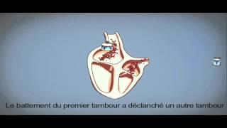Arrêt Cardiaque : Comment fonctionne votre cœur ?