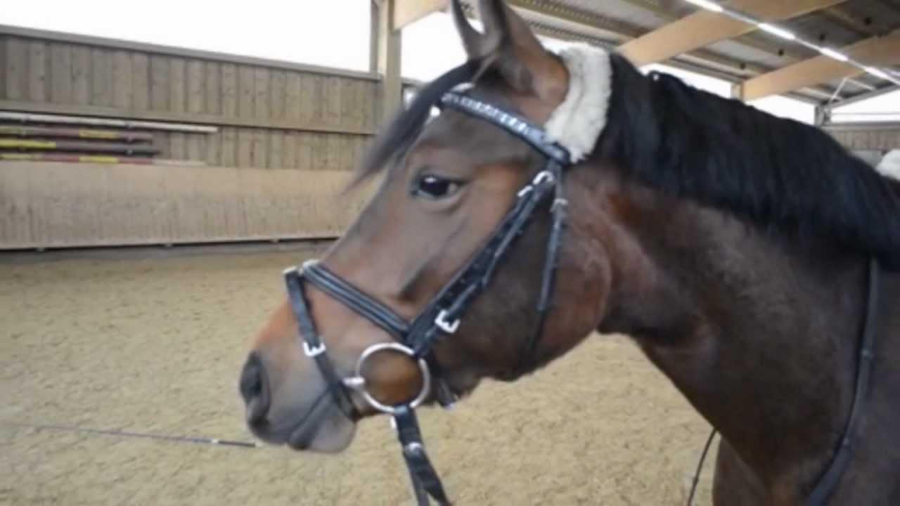 sold verkauft hexhex 4j hrige pony stute zu verkaufen. Black Bedroom Furniture Sets. Home Design Ideas