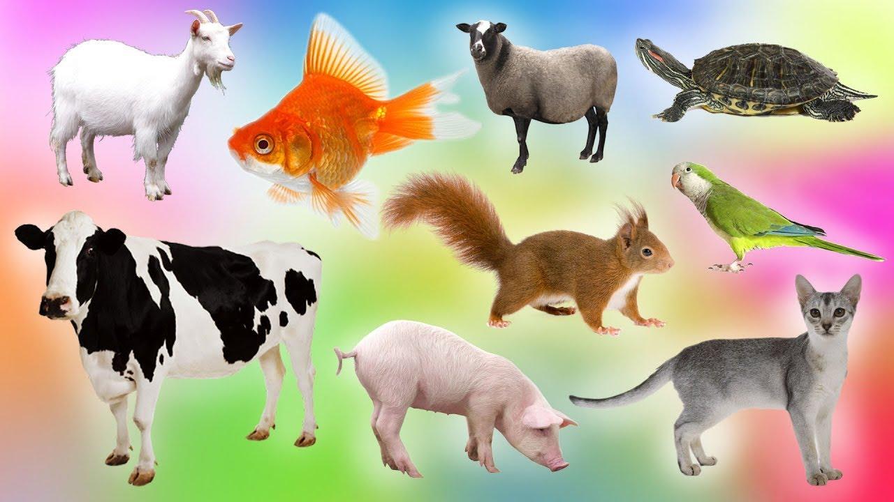 สือการเรียนรู้สำหรับเด็ก เรียนรู้ชื่อสัตว์บกสัตว์น้ำหลากหลายชนิด และเสียง Learning Animal Name