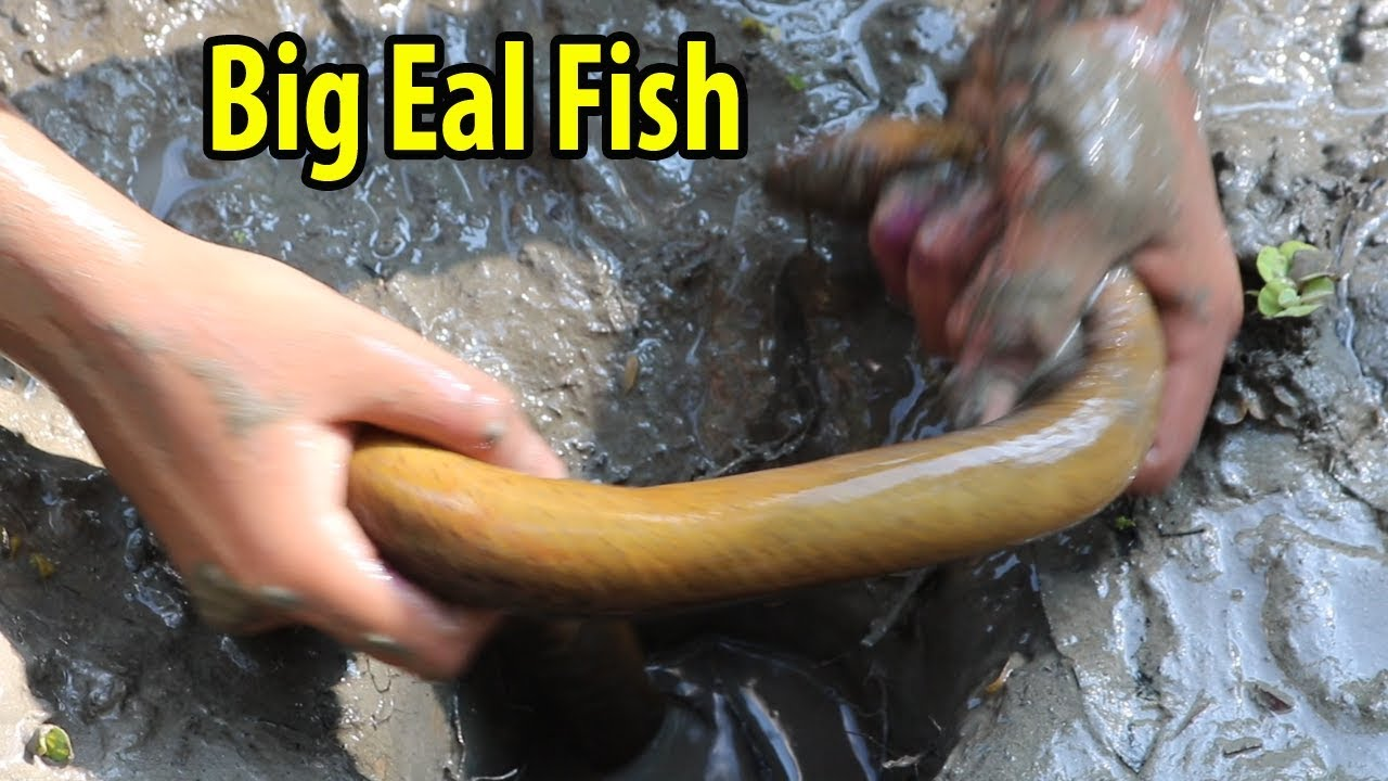 Unique Fishing Trap | Catching Big Eal Fish From a Hole | Amazing Oil Fishing