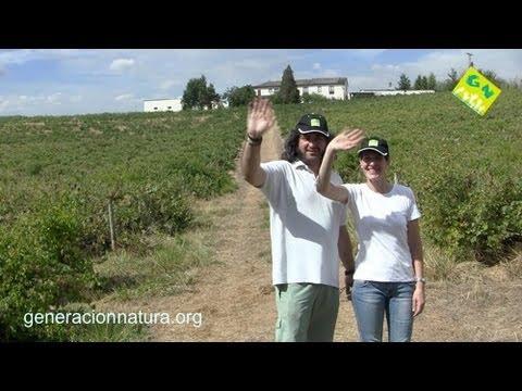 Vinos ecológicos españoles