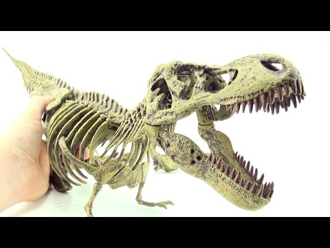 Count to 21 Tyrannosaurus fossil - Learn counting Tyrannosaurus Rex bones skeleton fossil