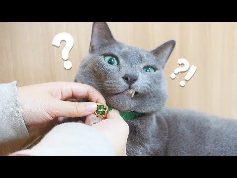 고양이 목걸이하면 너무 조이지 않나요? 요지는 왜 목걸이 안 해요?