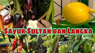 Sayur Sultan & Langka di Jerman    Ayo Dong Ikutan Ngeluyur & Intip