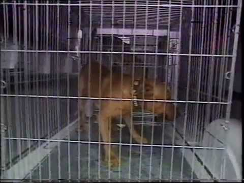 UK dangerous dog act 1991 enforcement - pitbull seizure