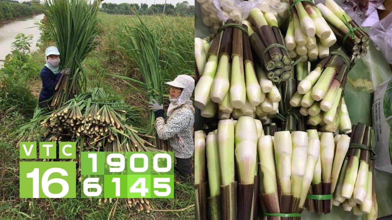 Củ niễng:  Bán 2.000 củ/ngày, lãi đủ 100 triệu | VTC16