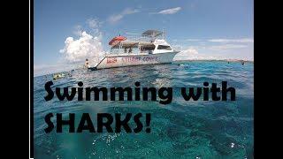 Stuart Cove Bahamas Snorkeling Adventure