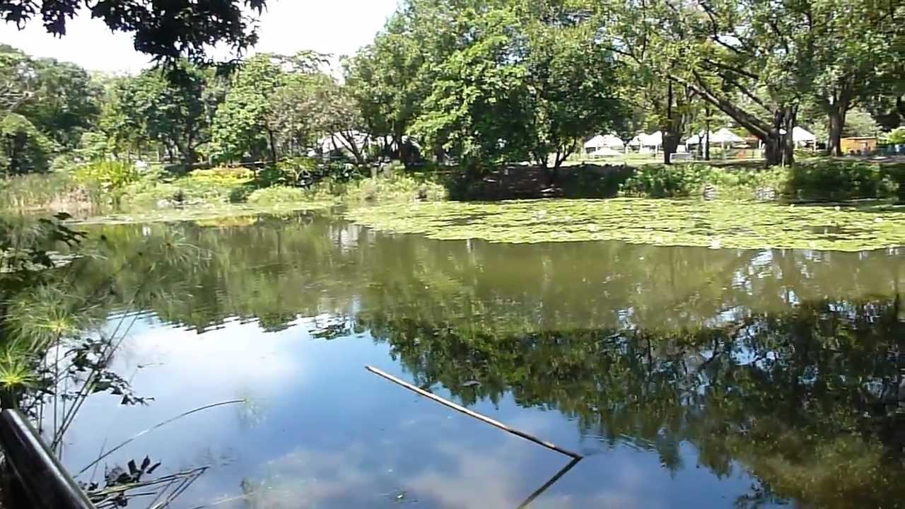 Jard n bot nico medell n lago restaurante medell n for Restaurante jardin botanico