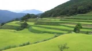 土佐町高須チキリ田