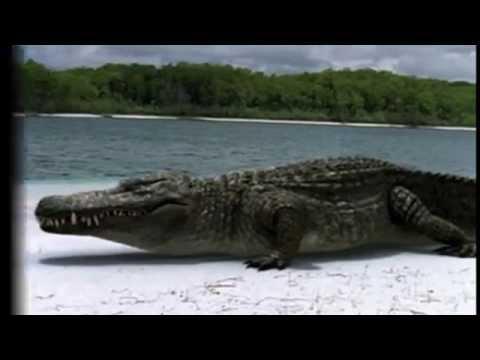 Prehistoric Park Deinosuchus